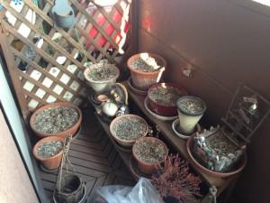 植木鉢 処分 広島